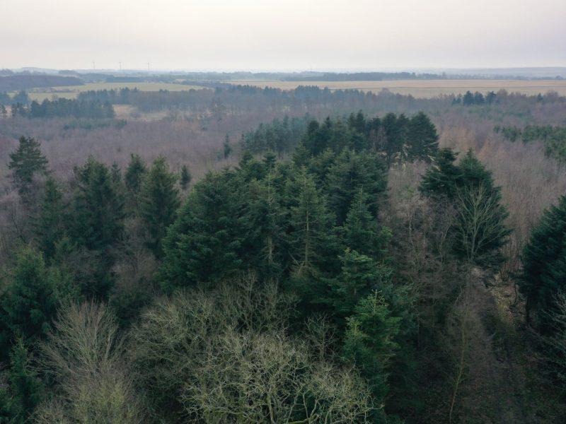 Kringelkær rummer også tæt nåleskov