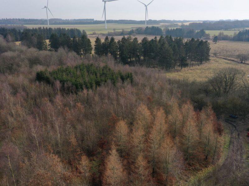 Flot landskab og tæt skov