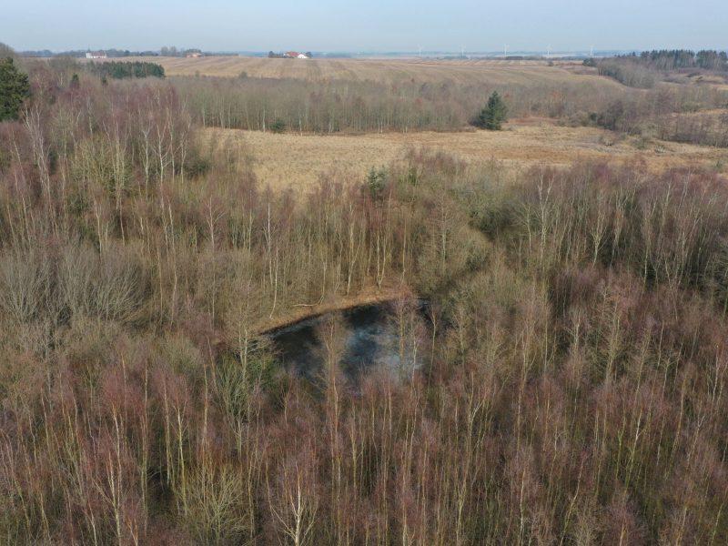 2 søer og områder med fugtig mose giver stor biodiversitet