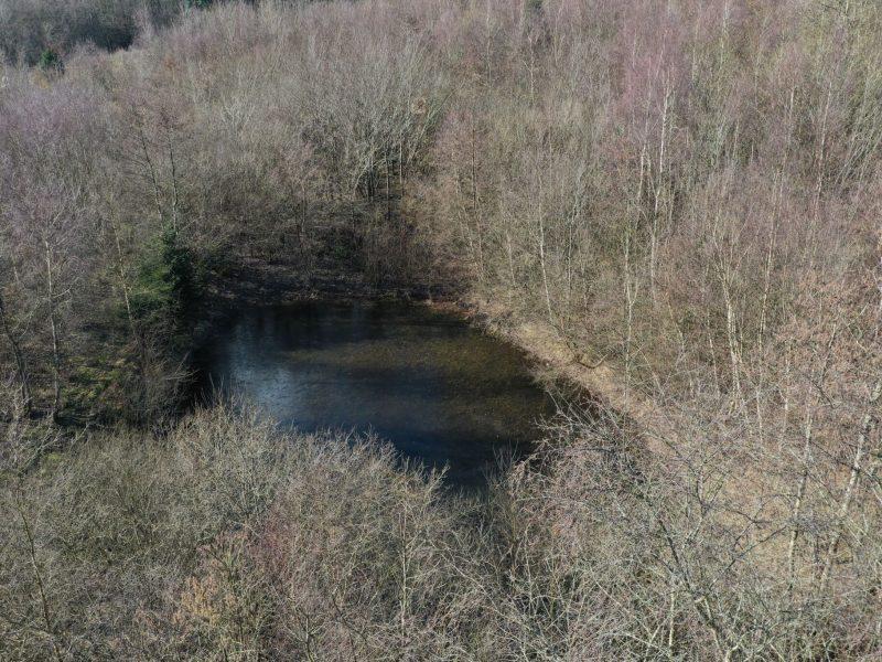 2 søer kan med fordel fritlægges, så der kommer mere lys til