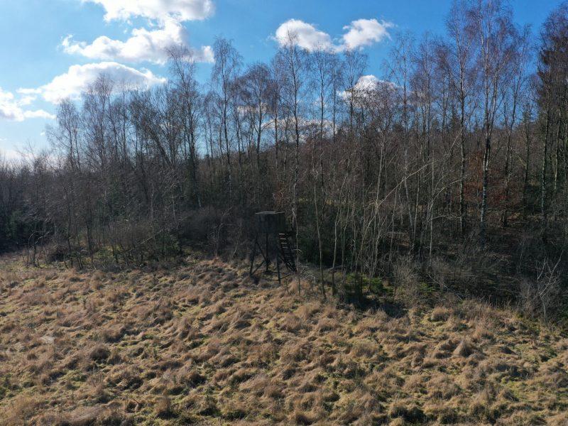 Flot indvendigt skovbryn - bemærk det kuperede terræn