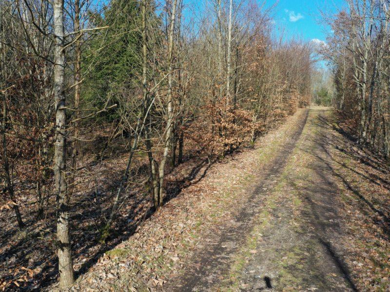 Store områder med ung , tæt og veletableret løvskov - mest eg og bøg