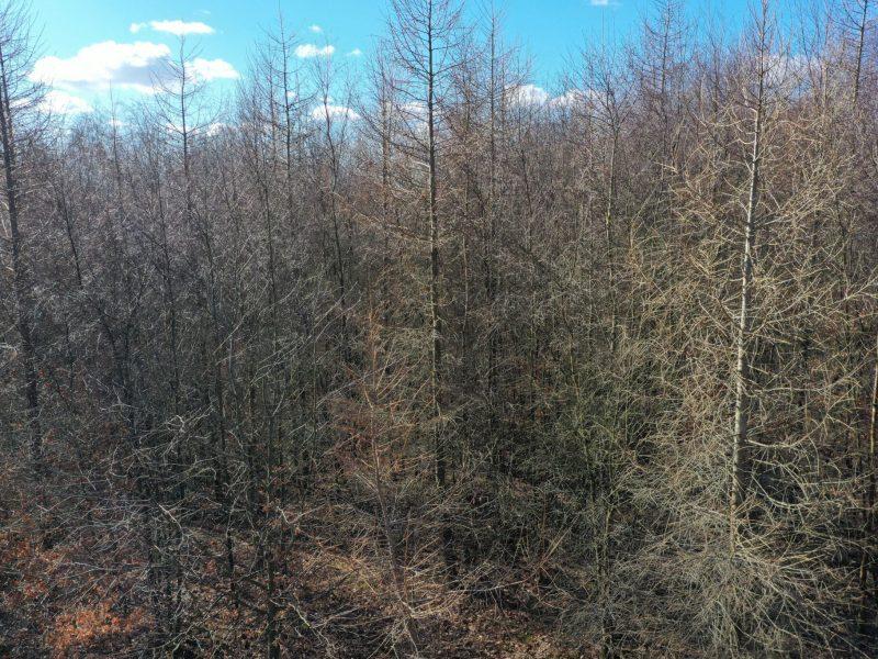 Kringelkær er primært tæt løvskov, men også med bevoksninger af lærk i god vækst