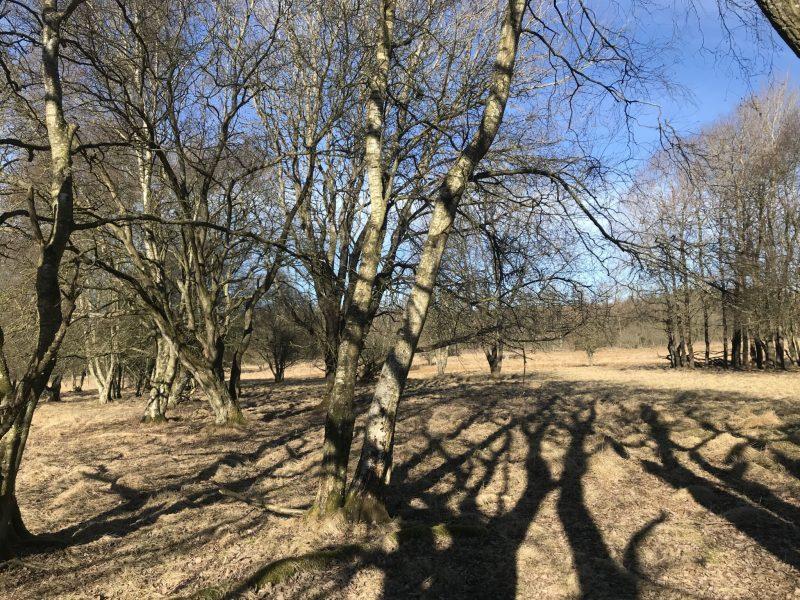 Flot natur i dyrehaven - 13 ha. med 12 stk. dåvildt og 3 stk. sika