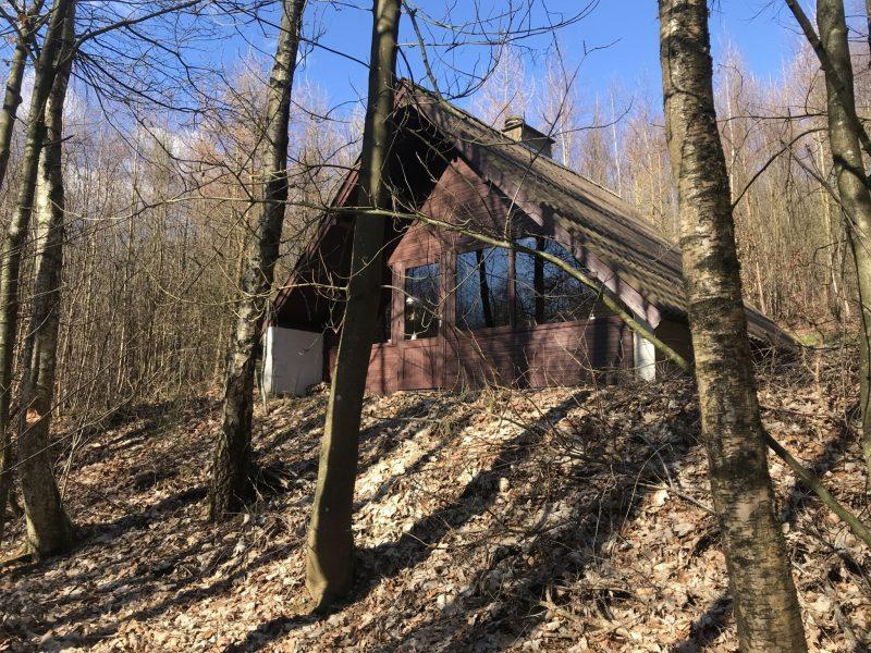 Hytten ligger på skråning med udsigt til tæt skov