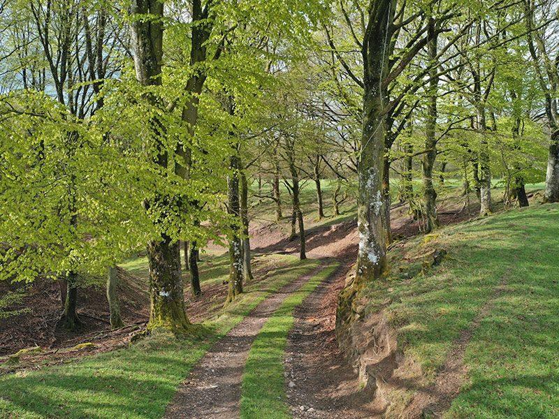 Terrænet er afvekslende med smukke skovstrækninger og dybe dale.
